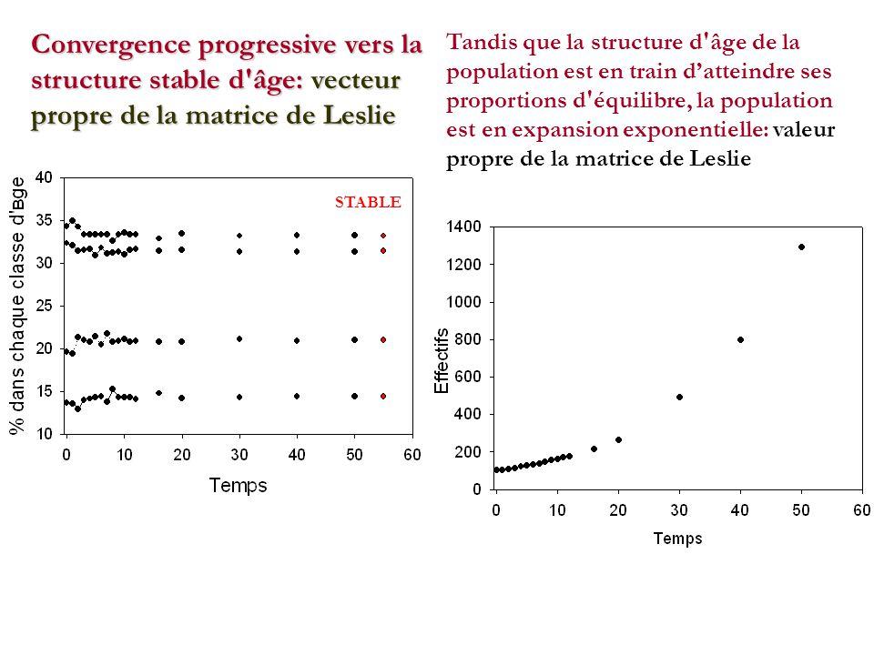 STABLE Convergence progressive vers la structure stable d âge: vecteur propre de la matrice de Leslie Tandis que la structure d âge de la population est en train datteindre ses proportions d équilibre, la population est en expansion exponentielle: valeur propre de la matrice de Leslie