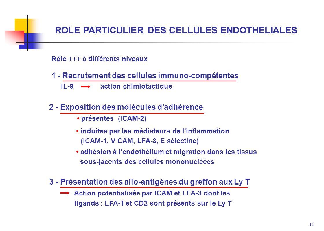 10 ROLE PARTICULIER DES CELLULES ENDOTHELIALES 1 - Recrutement des cellules immuno-compétentes IL-8 action chimiotactique Rôle +++ à différents niveau