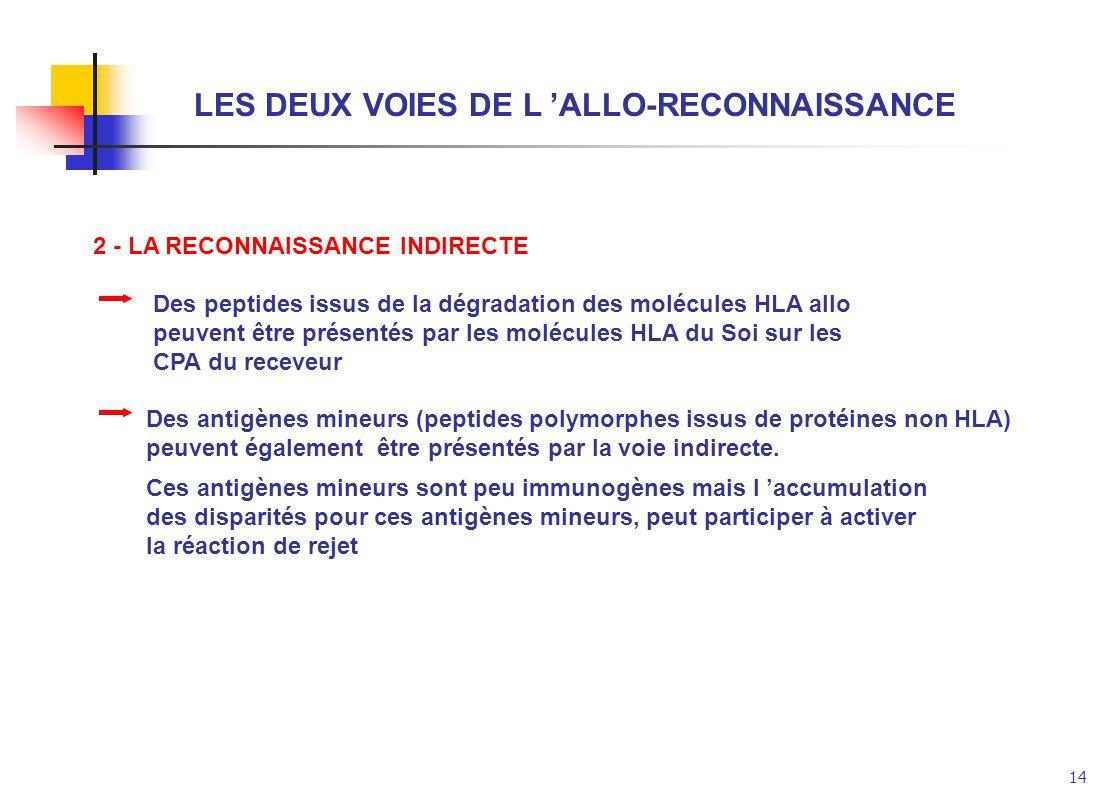14 LES DEUX VOIES DE L ALLO-RECONNAISSANCE 2 - LA RECONNAISSANCE INDIRECTE Des peptides issus de la dégradation des molécules HLA allo peuvent être pr