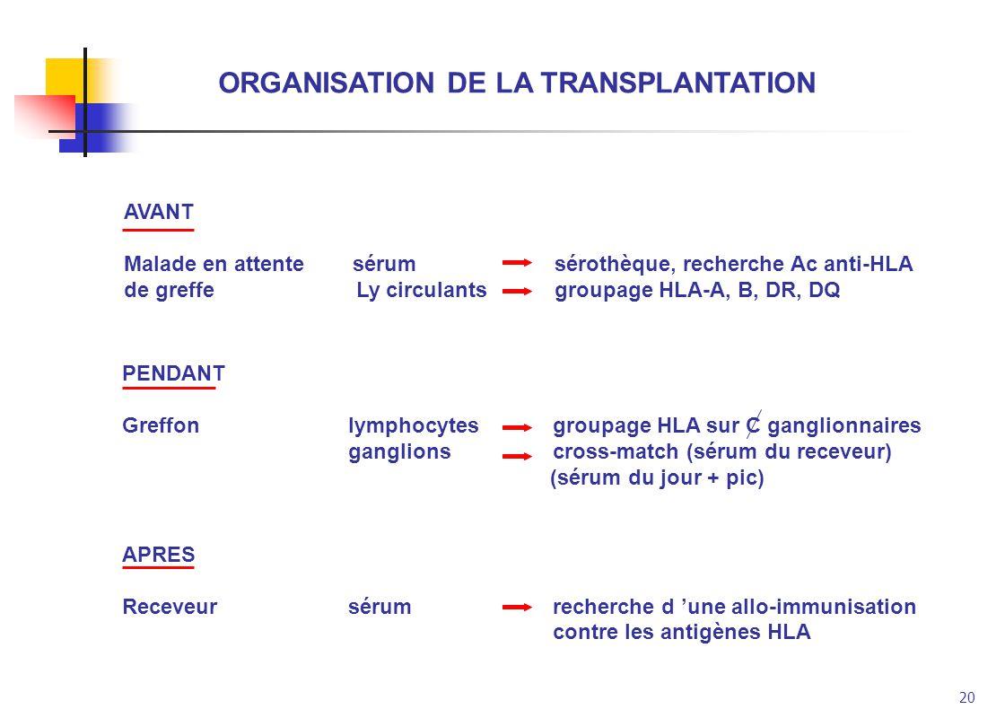 20 ORGANISATION DE LA TRANSPLANTATION AVANT Malade en attente sérumsérothèque, recherche Ac anti-HLA de greffe Ly circulantsgroupage HLA-A, B, DR, DQ