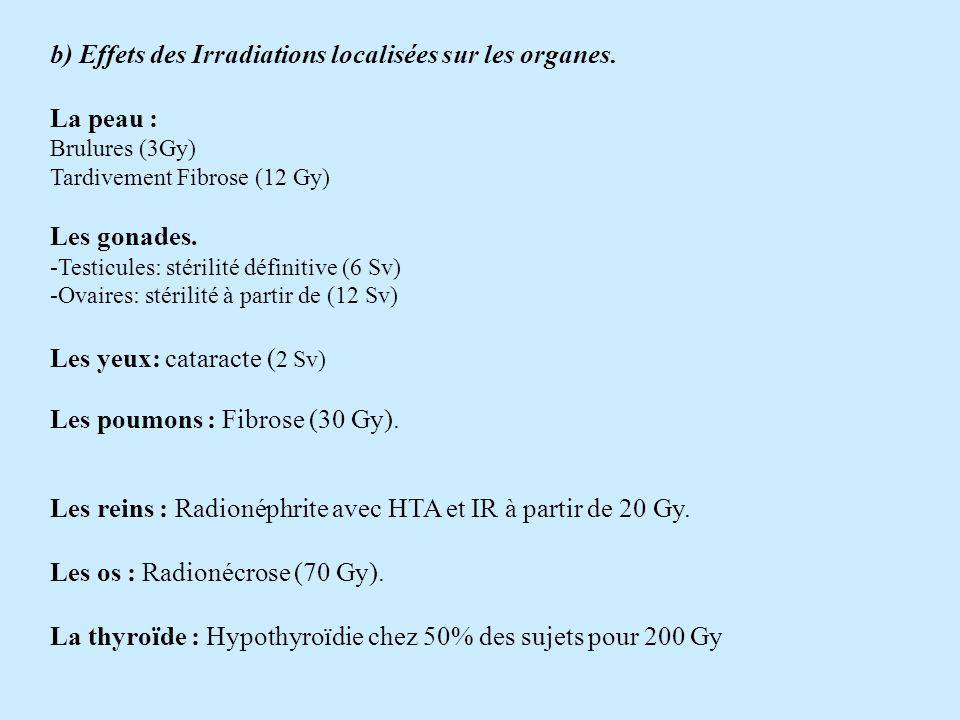 b) Effets des Irradiations localisées sur les organes.