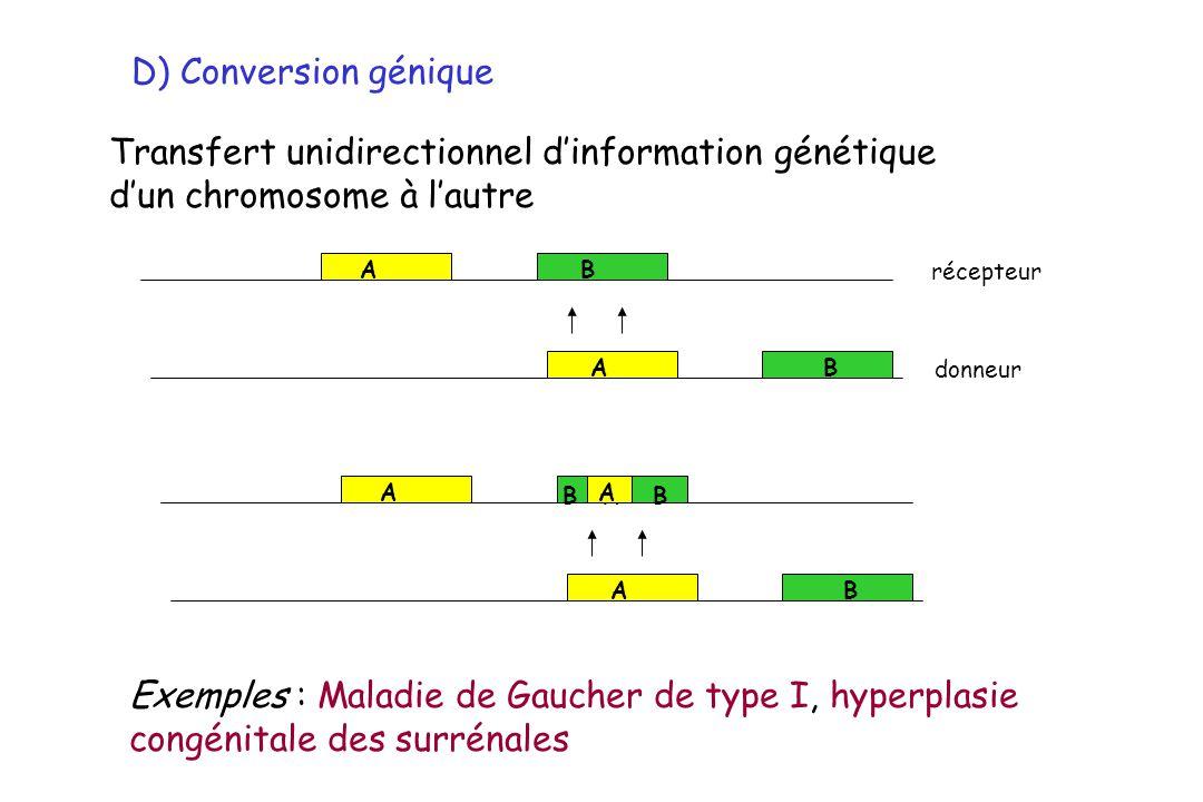 D) Conversion génique Transfert unidirectionnel dinformation génétique dun chromosome à lautre A A B B A A B B BA A Exemples : Maladie de Gaucher de t