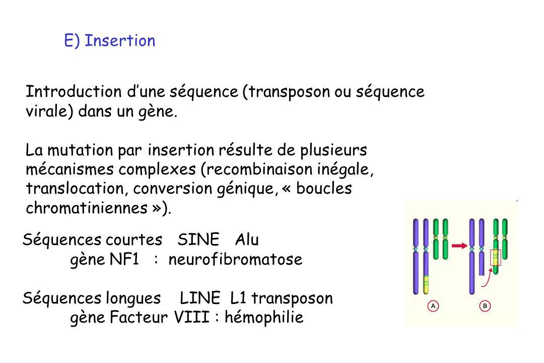E) Insertion Introduction dune séquence (transposon ou séquence virale) dans un gène. La mutation par insertion résulte de plusieurs mécanismes comple