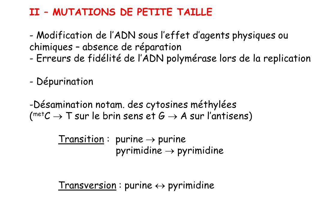 II – MUTATIONS DE PETITE TAILLE - Modification de lADN sous leffet dagents physiques ou chimiques – absence de réparation - Erreurs de fidélité de lAD
