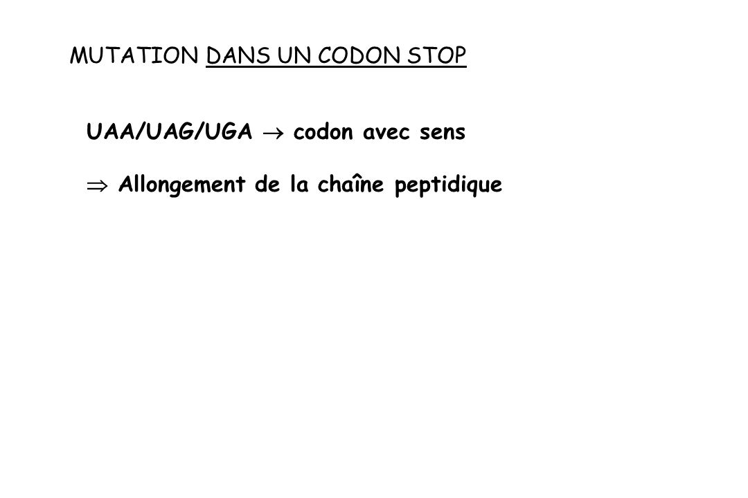 MUTATION DANS UN CODON STOP UAA/UAG/UGA codon avec sens Allongement de la chaîne peptidique