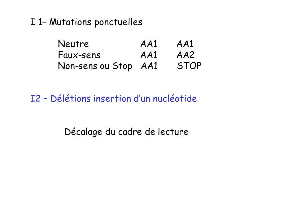 I 1– Mutations ponctuelles Neutre AA1 AA1 Faux-sens AA1 AA2 Non-sens ou Stop AA1 STOP I2 – Délétions insertion dun nucléotide Décalage du cadre de lec