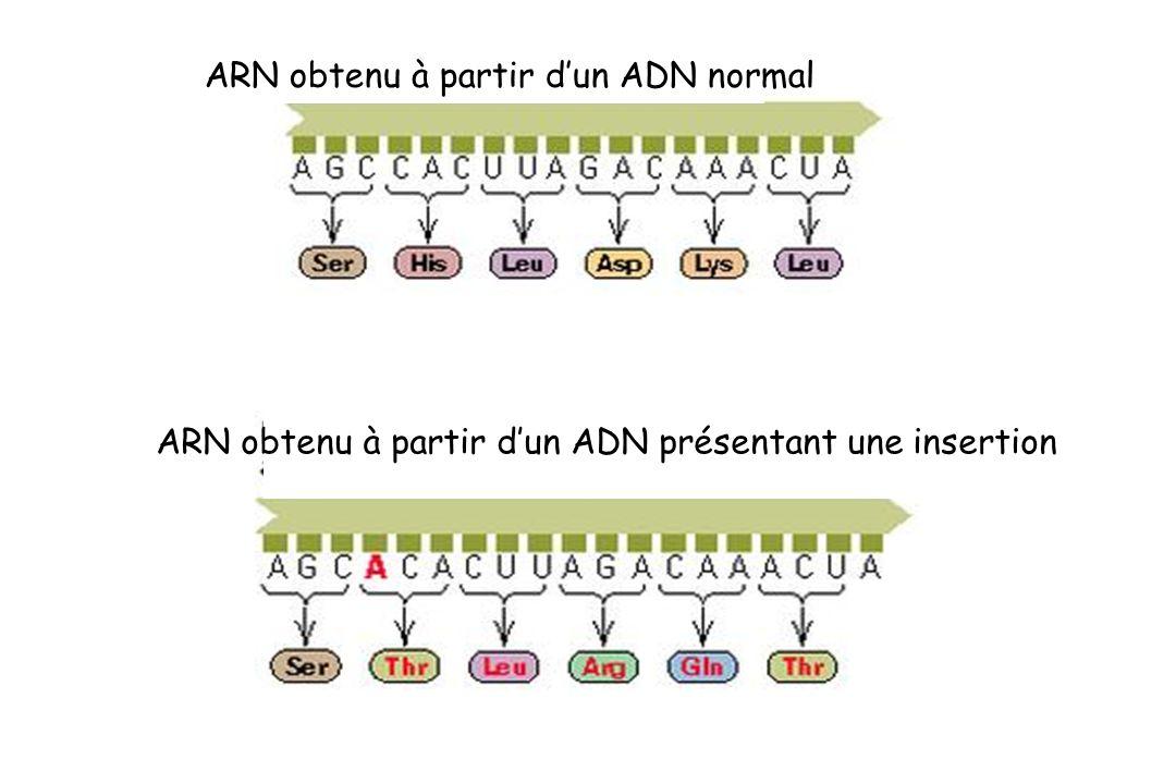 ARN obtenu à partir dun ADN normal ARN obtenu à partir dun ADN présentant une insertion