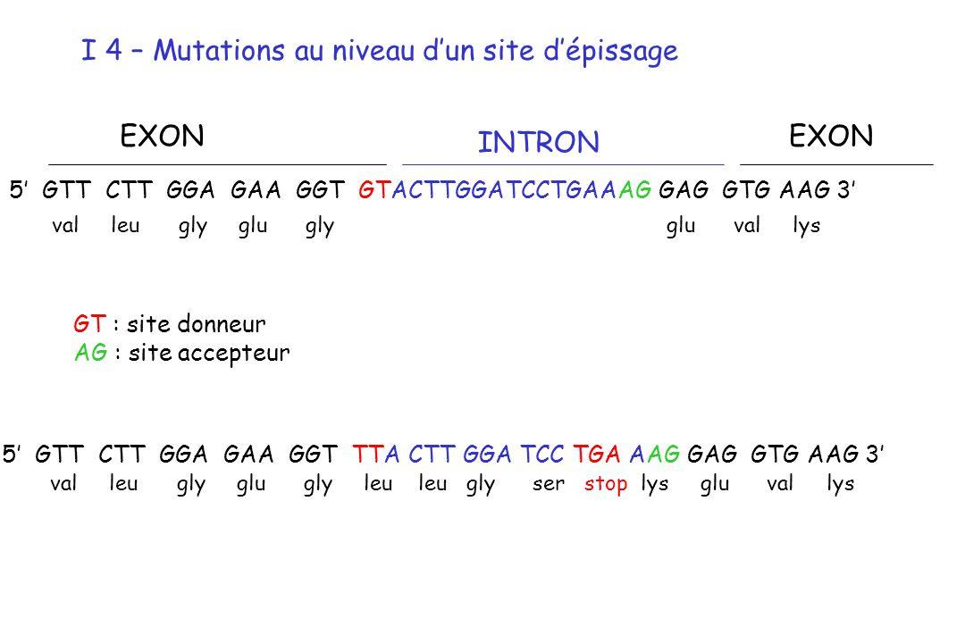 5 GTT CTT GGA GAA GGT GTACTTGGATCCTGAAAG GAG GTG AAG 3 EXON INTRON EXON GT : site donneur AG : site accepteur 5 GTT CTT GGA GAA GGT TTA CTT GGA TCC TG