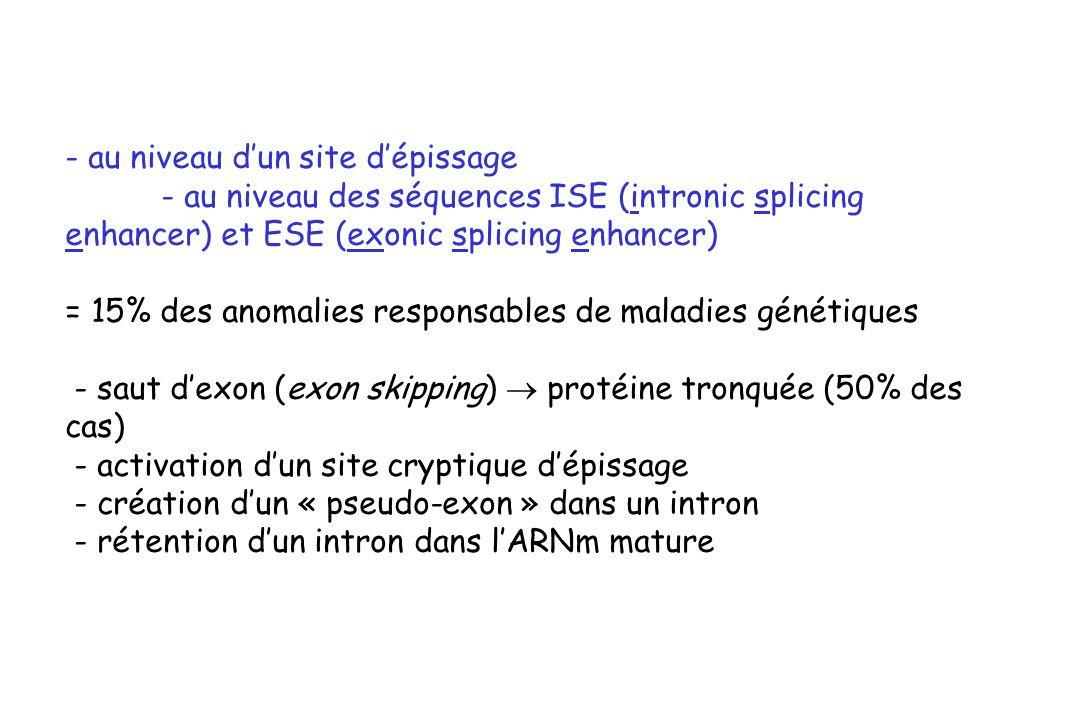 - au niveau dun site dépissage - au niveau des séquences ISE (intronic splicing enhancer) et ESE (exonic splicing enhancer) = 15% des anomalies respon