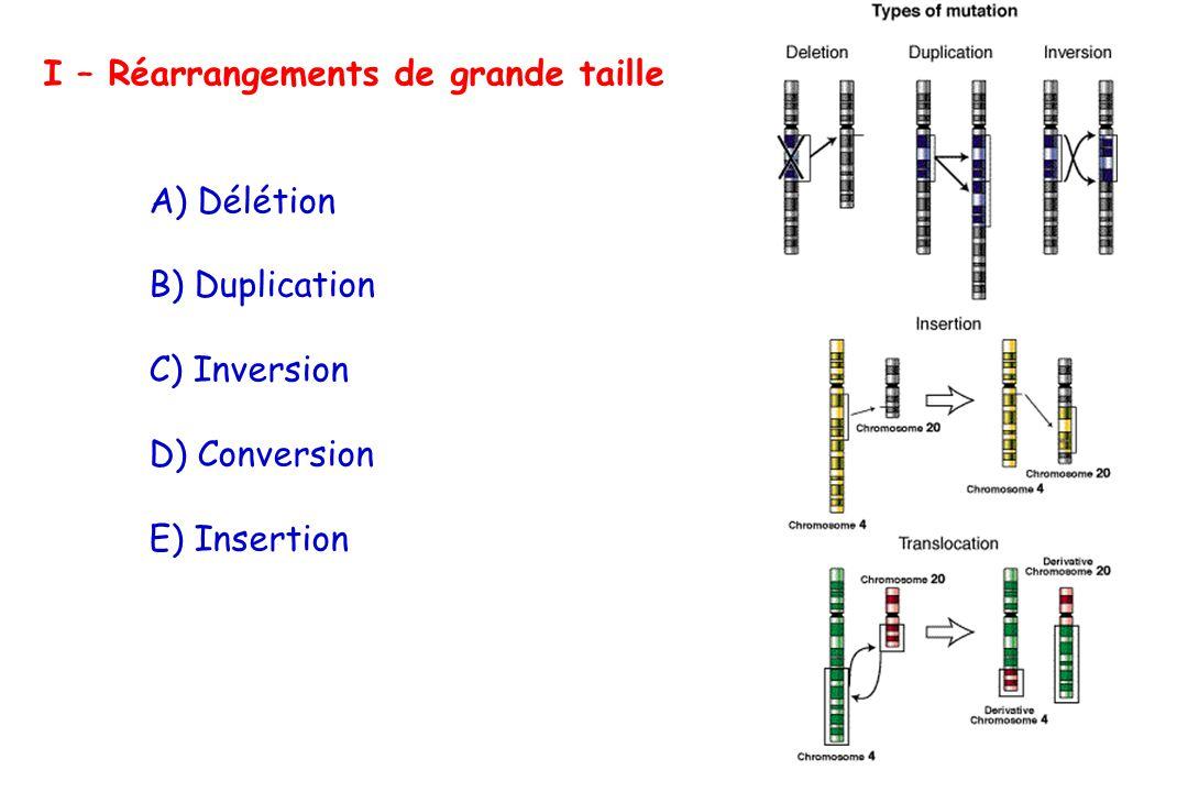 I – Réarrangements de grande taille A) Délétion B) Duplication C) Inversion D) Conversion E) Insertion
