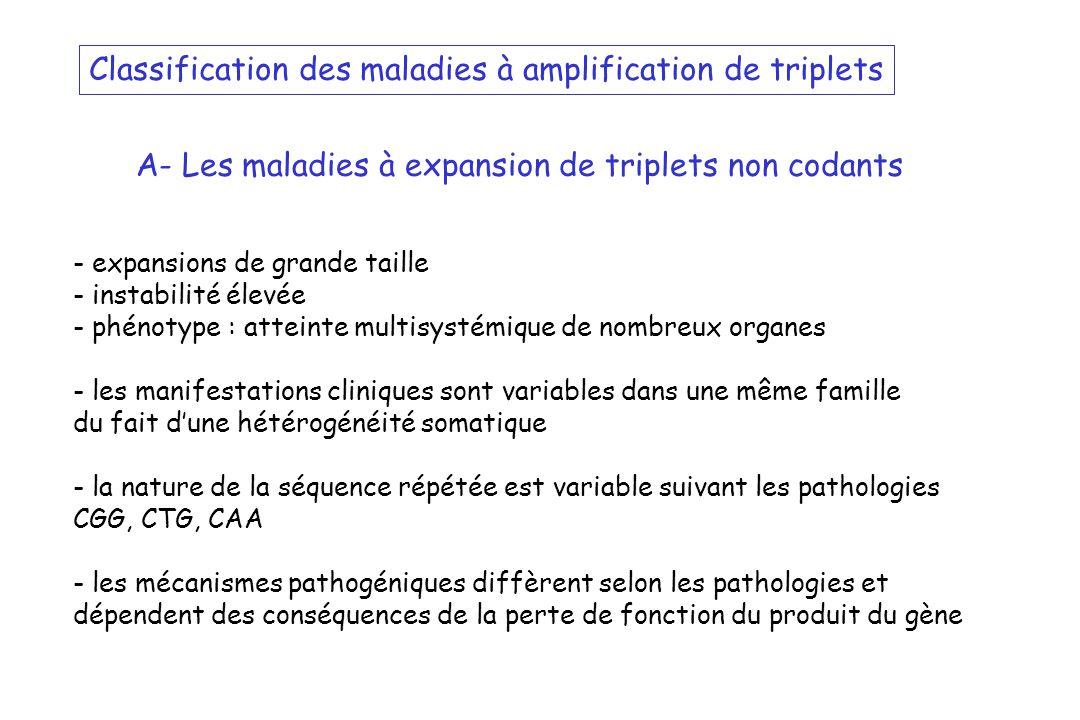Classification des maladies à amplification de triplets A- Les maladies à expansion de triplets non codants - expansions de grande taille - instabilit