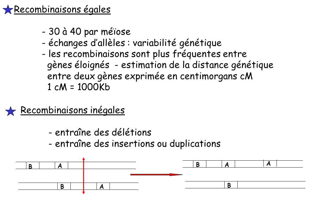 Recombinaisons égales - 30 à 40 par méïose - échanges dallèles : variabilité génétique - les recombinaisons sont plus fréquentes entre gènes éloignés