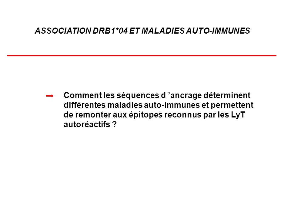 ASSOCIATION DRB1*04 ET MALADIES AUTO-IMMUNES Comment les séquences d ancrage déterminent différentes maladies auto-immunes et permettent de remonter a