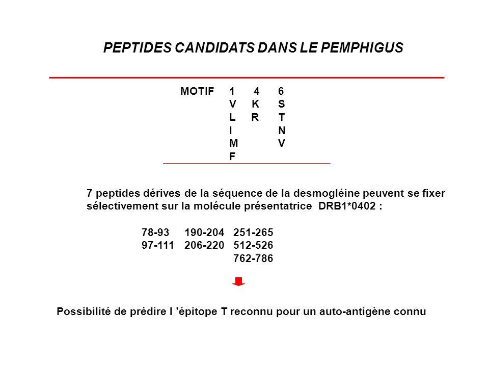 PEPTIDES CANDIDATS DANS LE PEMPHIGUS MOTIF1 46 V KS L RT IN MV F 7 peptides dérives de la séquence de la desmogléine peuvent se fixer sélectivement su