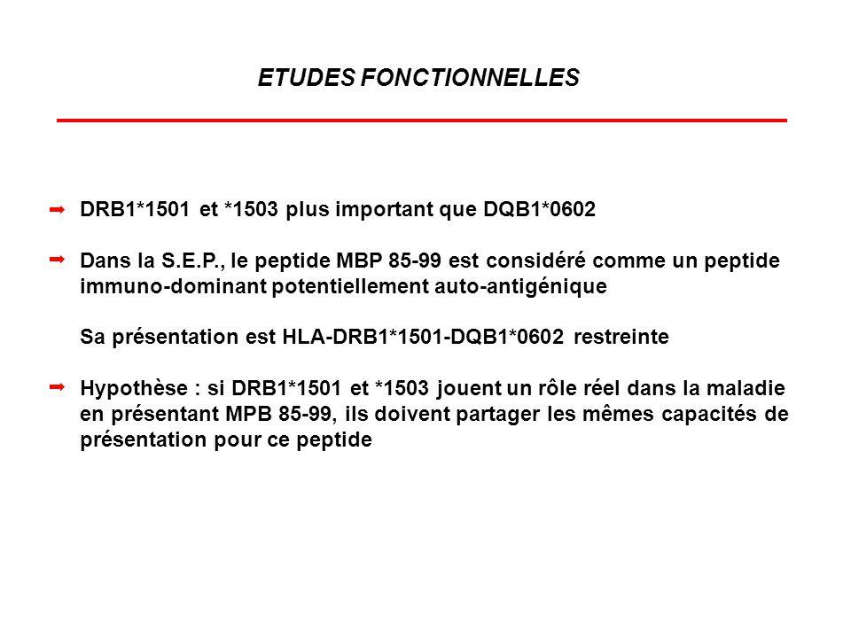 DRB1*1501 et *1503 plus important que DQB1*0602 Dans la S.E.P., le peptide MBP 85-99 est considéré comme un peptide immuno-dominant potentiellement au