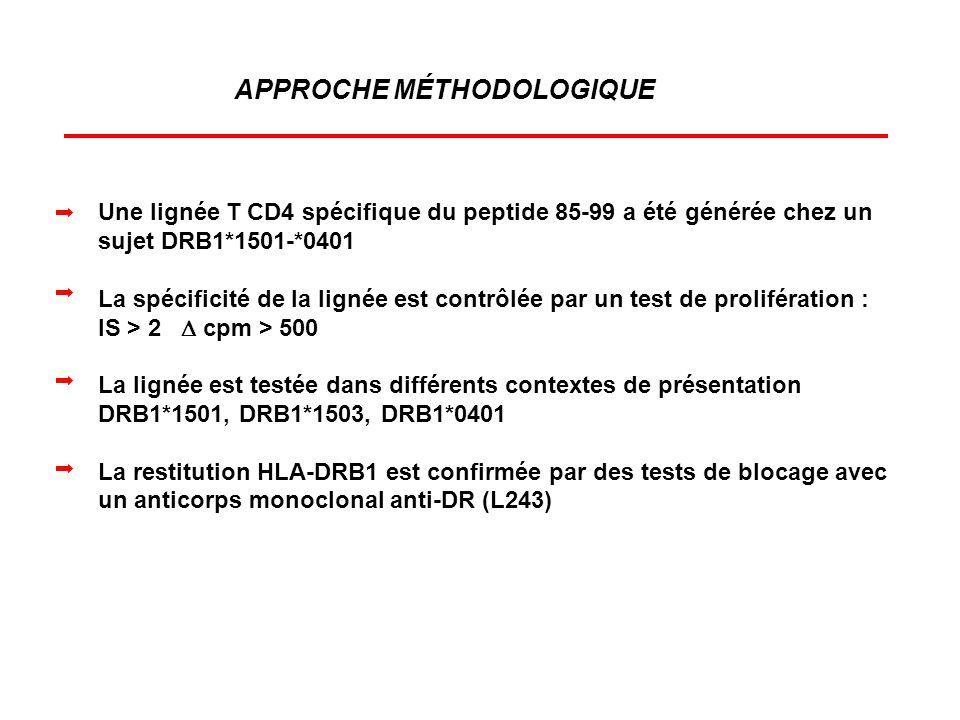 APPROCHE MÉTHODOLOGIQUE Une lignée T CD4 spécifique du peptide 85-99 a été générée chez un sujet DRB1*1501-*0401 La spécificité de la lignée est contr