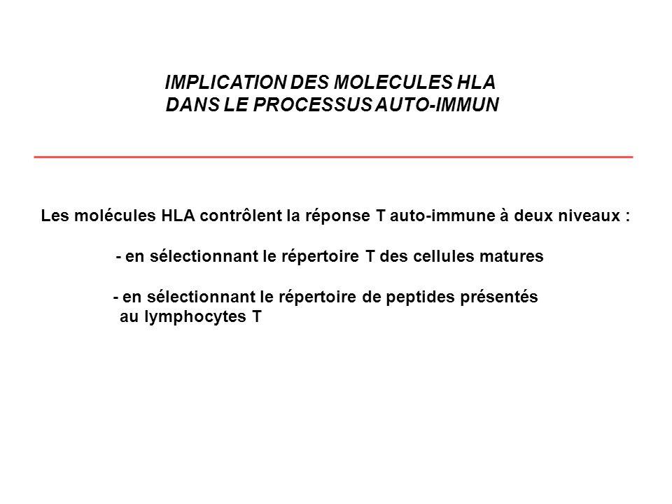 Les molécules HLA contrôlent la réponse T auto-immune à deux niveaux : - en sélectionnant le répertoire T des cellules matures - en sélectionnant le r