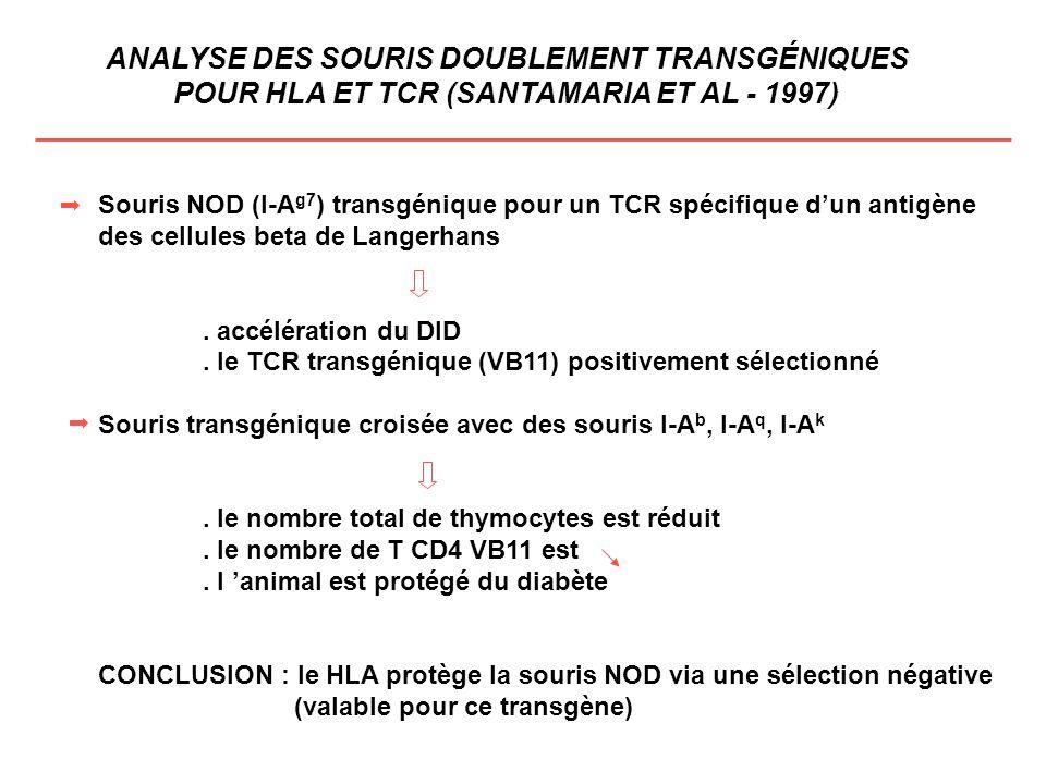 ANALYSE DES SOURIS DOUBLEMENT TRANSGÉNIQUES POUR HLA ET TCR (SANTAMARIA ET AL - 1997) Souris NOD (I-A g7 ) transgénique pour un TCR spécifique dun ant