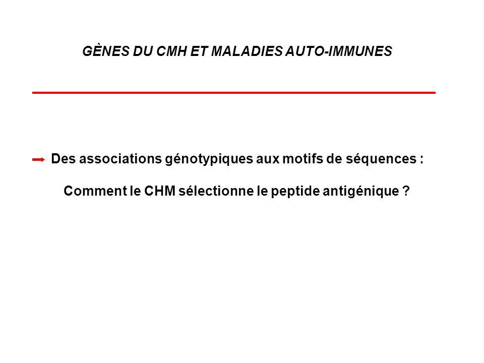 GÈNES DU CMH ET MALADIES AUTO-IMMUNES Des associations génotypiques aux motifs de séquences : Comment le CHM sélectionne le peptide antigénique ?