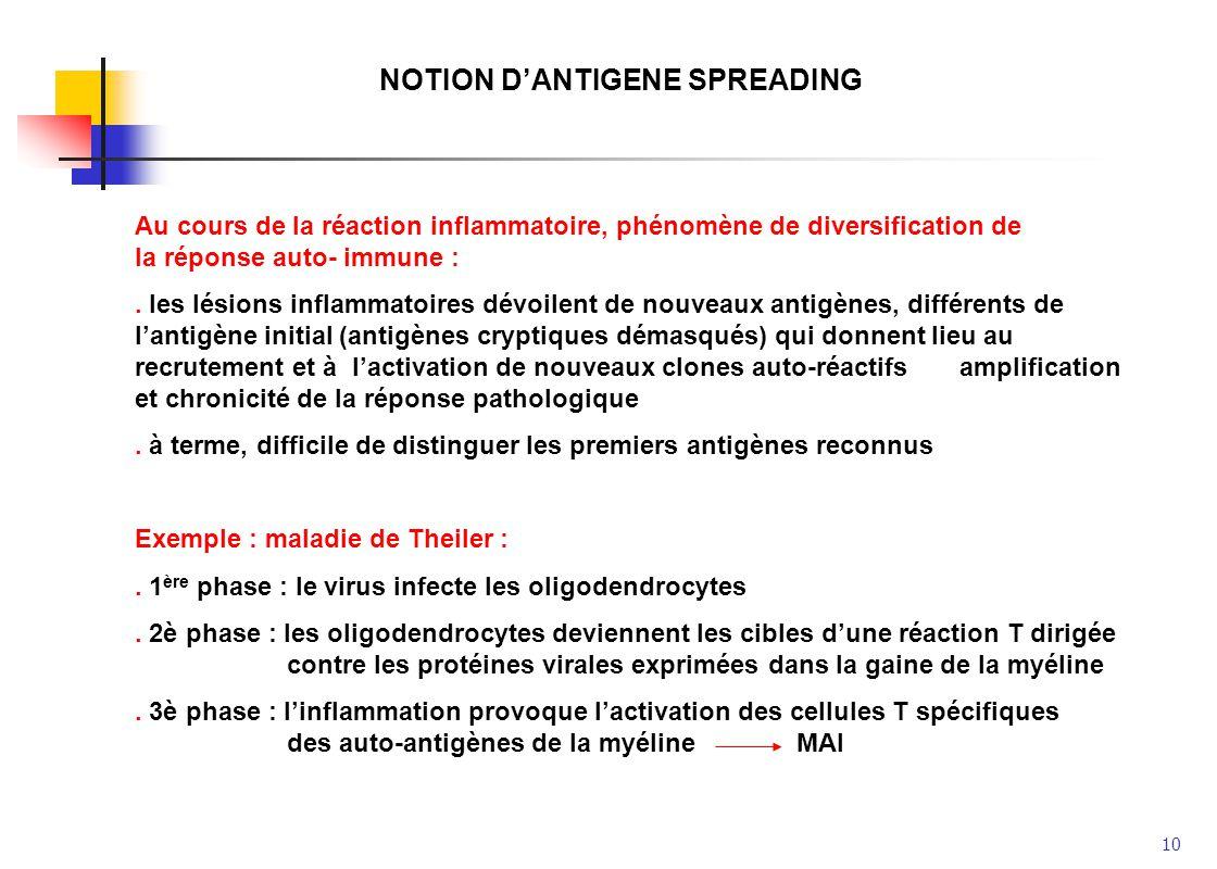 10 NOTION DANTIGENE SPREADING Au cours de la réaction inflammatoire, phénomène de diversification de la réponse auto- immune :. les lésions inflammato