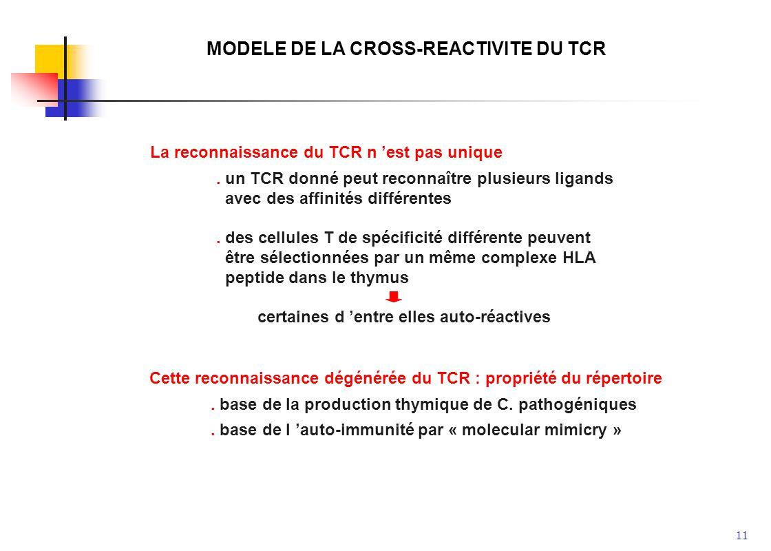 11 MODELE DE LA CROSS-REACTIVITE DU TCR La reconnaissance du TCR n est pas unique. un TCR donné peut reconnaître plusieurs ligands avec des affinités