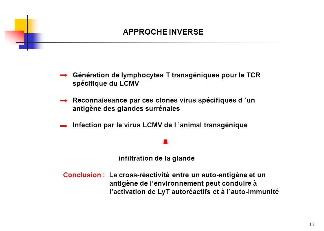 13 APPROCHE INVERSE Génération de lymphocytes T transgéniques pour le TCR spécifique du LCMV Reconnaissance par ces clones virus spécifiques d un anti