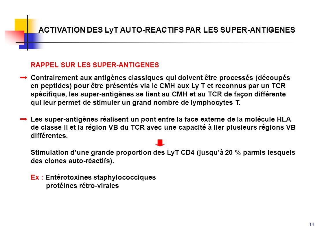 14 ACTIVATION DES LyT AUTO-REACTIFS PAR LES SUPER-ANTIGENES RAPPEL SUR LES SUPER-ANTIGENES Contrairement aux antigènes classiques qui doivent être pro