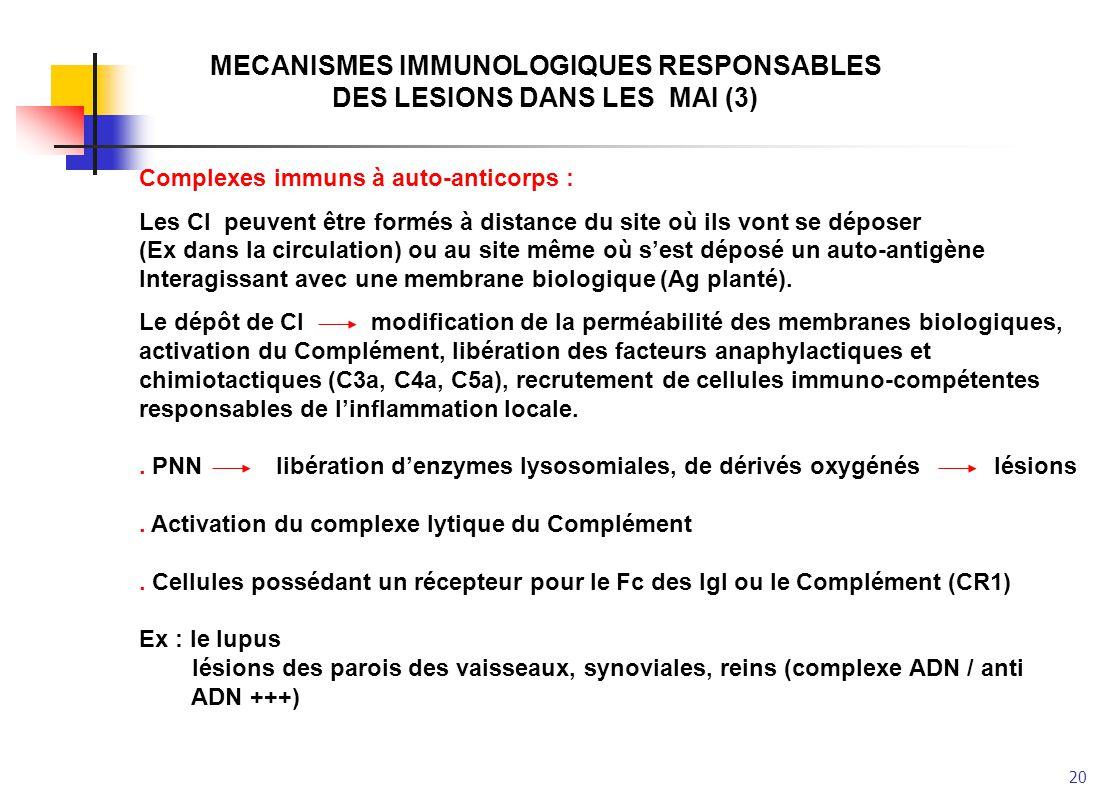 20 MECANISMES IMMUNOLOGIQUES RESPONSABLES DES LESIONS DANS LES MAI (3) Complexes immuns à auto-anticorps : Les CI peuvent être formés à distance du si
