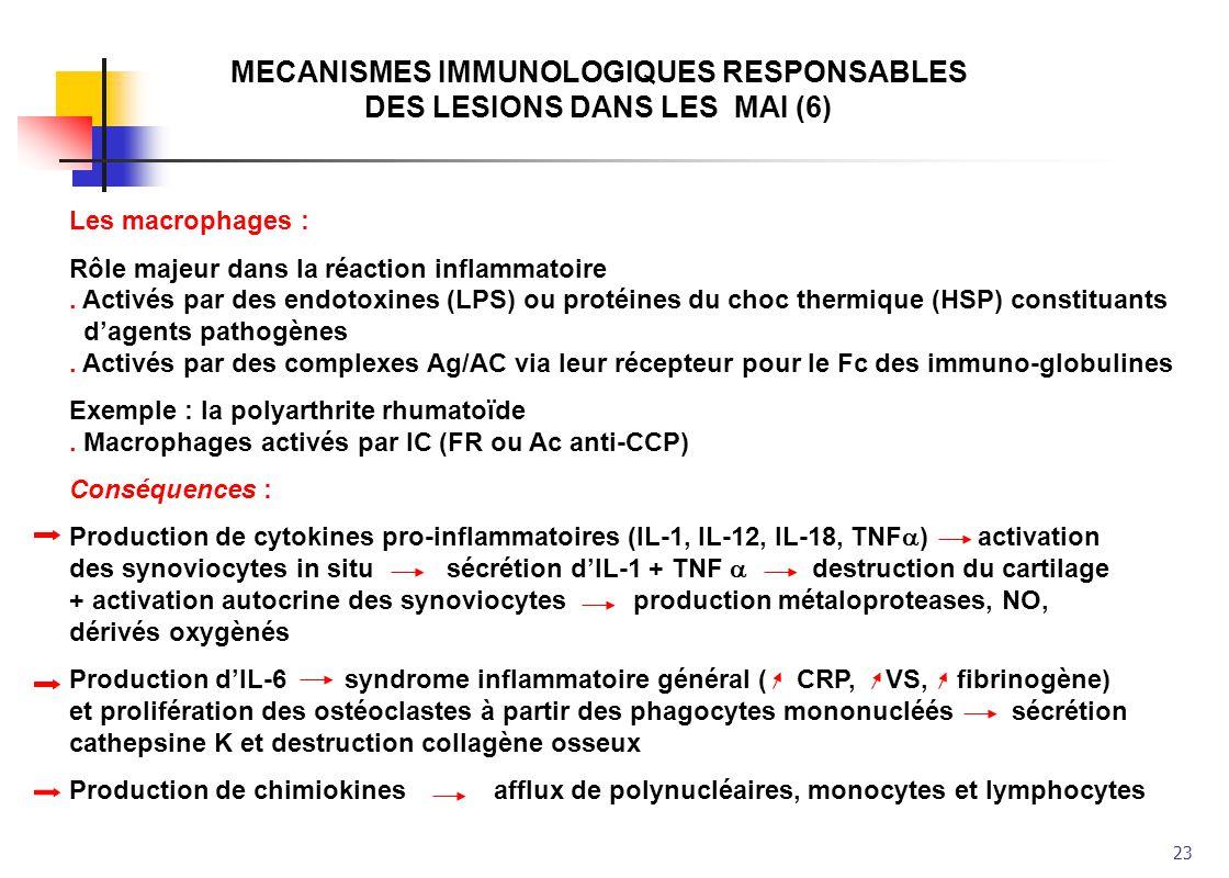 23 MECANISMES IMMUNOLOGIQUES RESPONSABLES DES LESIONS DANS LES MAI (6) Les macrophages : Rôle majeur dans la réaction inflammatoire. Activés par des e