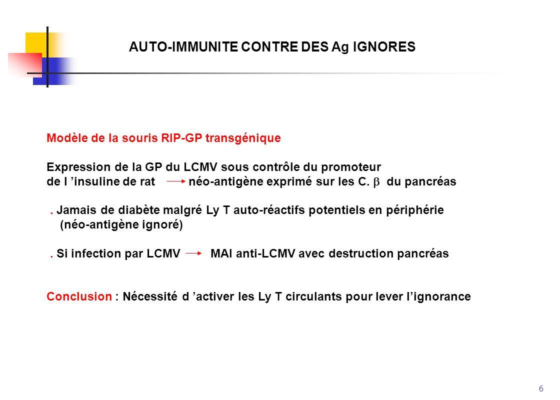 6 AUTO-IMMUNITE CONTRE DES Ag IGNORES Modèle de la souris RIP-GP transgénique Expression de la GP du LCMV sous contrôle du promoteur de l insuline de