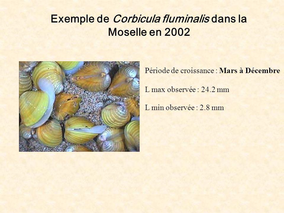 Exemple de Corbicula fluminalis dans la Moselle en 2002 Période de croissance : Mars à Décembre L max observée : 24.2 mm L min observée : 2.8 mm