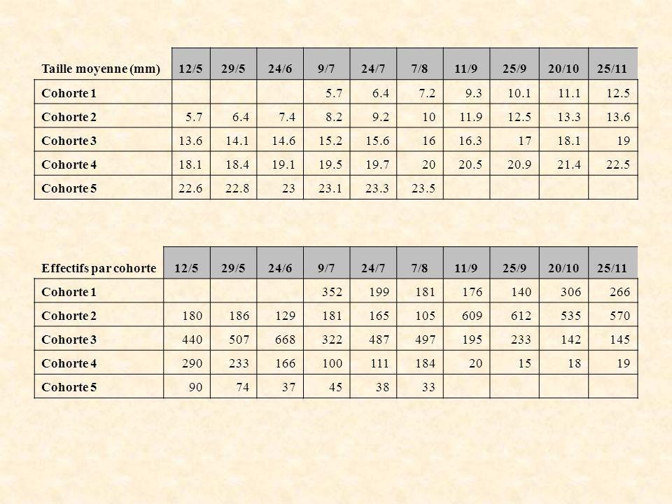 Taille moyenne (mm)12/529/524/69/724/77/811/925/920/1025/11 Cohorte 15.76.47.29.310.111.112.5 Cohorte 25.76.47.48.29.21011.912.513.313.6 Cohorte 313.6