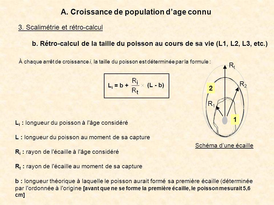 3. Scalimétrie et rétro-calcul A. Croissance de population dage connu b. Rétro-calcul de la taille du poisson au cours de sa vie (L1, L2, L3, etc.) L