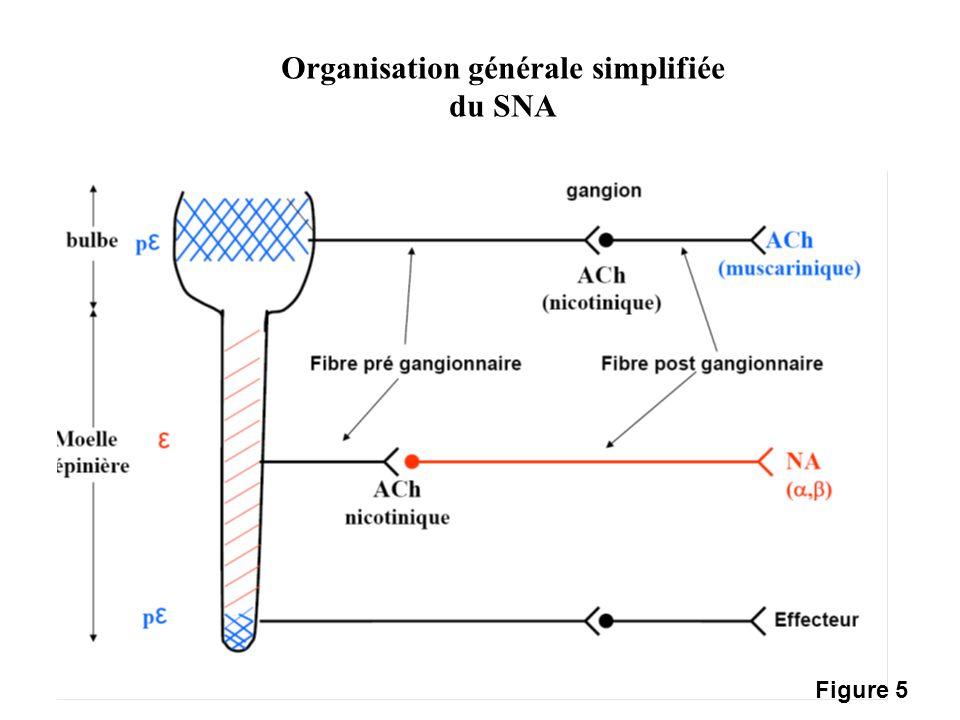 Organisation générale simplifiée du SNA Figure 5