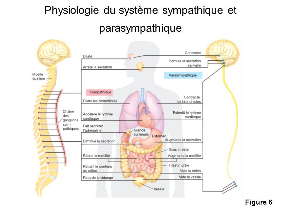 Physiologie du système sympathique et parasympathique Figure 6