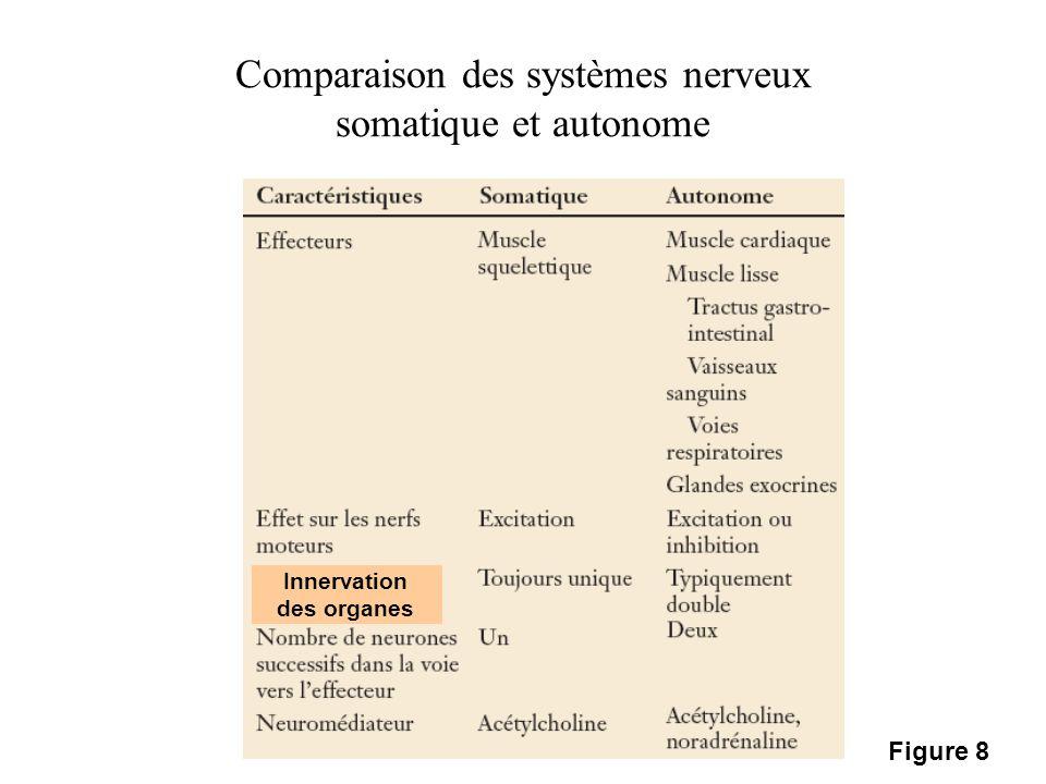 Comparaison des systèmes nerveux somatique et autonome Innervation des organes Figure 8