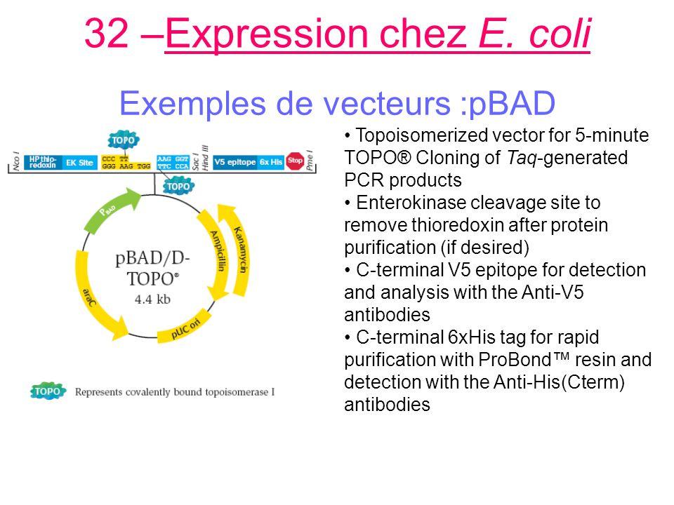32 –Expression chez E.