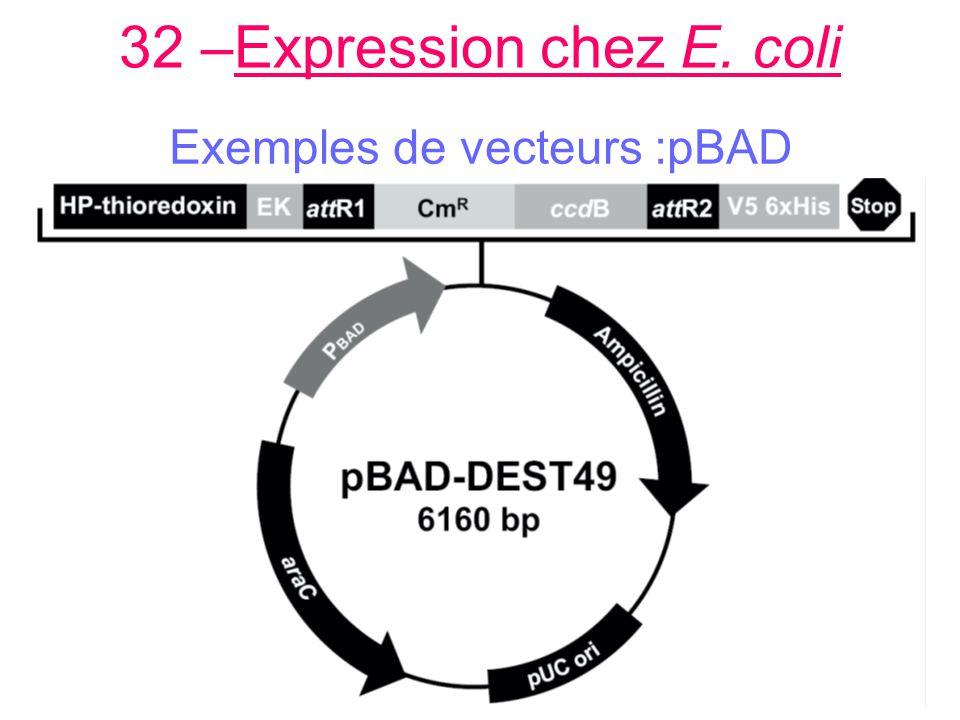 32 –Expression chez E. coli Exemples de vecteurs :pBAD