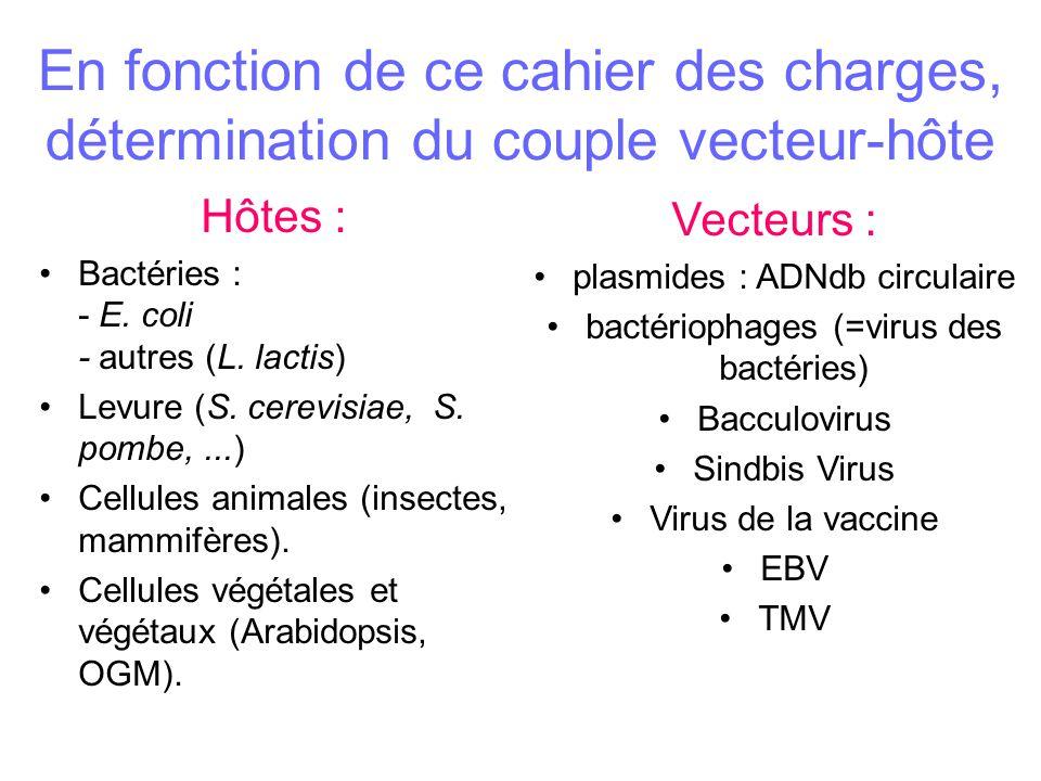 En fonction de ce cahier des charges, détermination du couple vecteur-hôte Hôtes : Bactéries : - E.