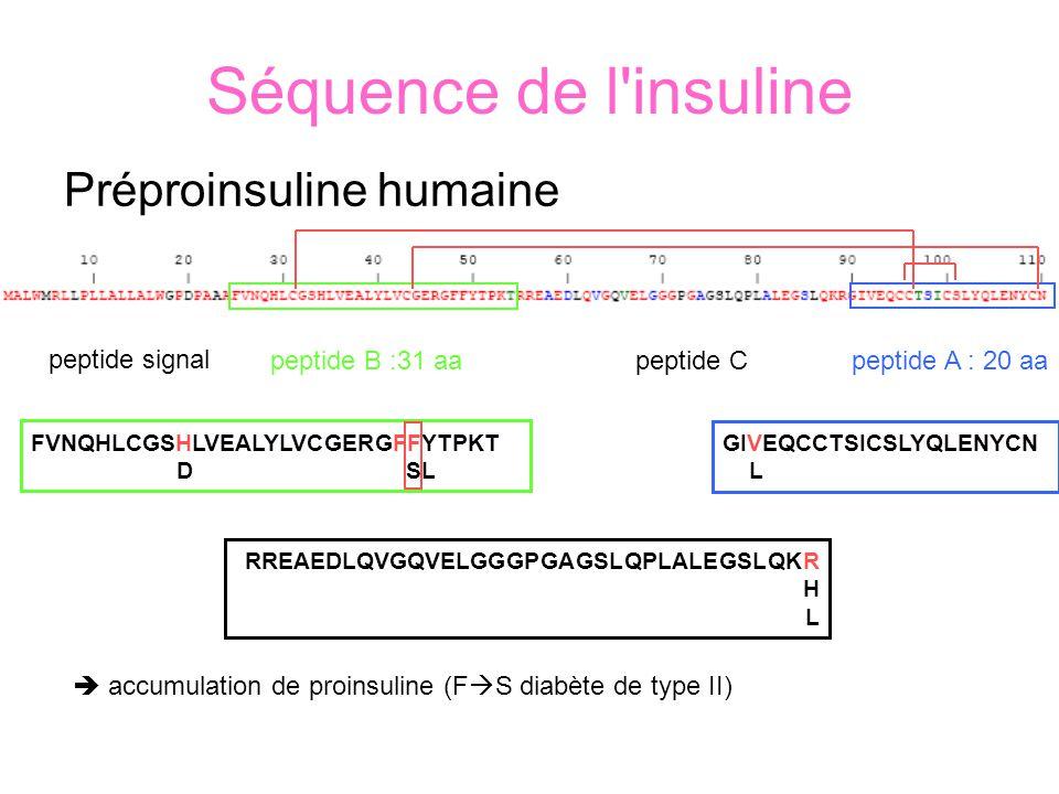 Séquence de l insuline Préproinsuline humaine peptide B :31 aapeptide A : 20 aa peptide signal peptide C FVNQHLCGSHLVEALYLVCGERGFFYTPKT D fSL RREAEDLQVGQVELGGGPGAGSLQPLALEGSLQKR H L GIVEQCCTSICSLYQLENYCN L accumulation de proinsuline (F S diabète de type II)