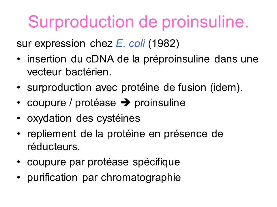 Surproduction de proinsuline.sur expression chez E.