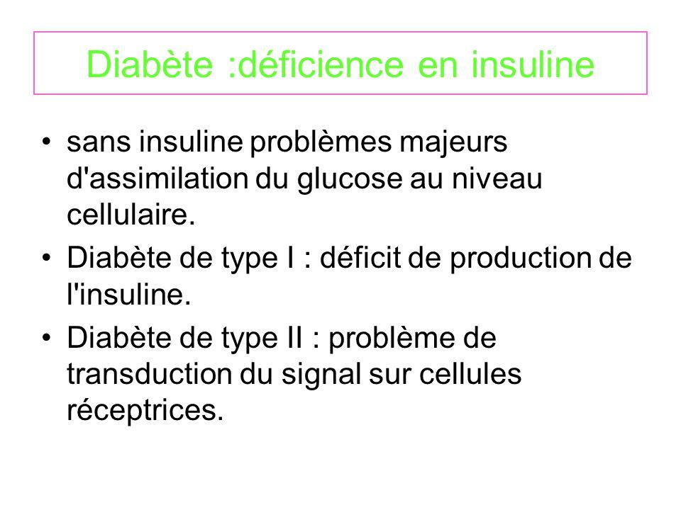 Diabète :déficience en insuline sans insuline problèmes majeurs d assimilation du glucose au niveau cellulaire.