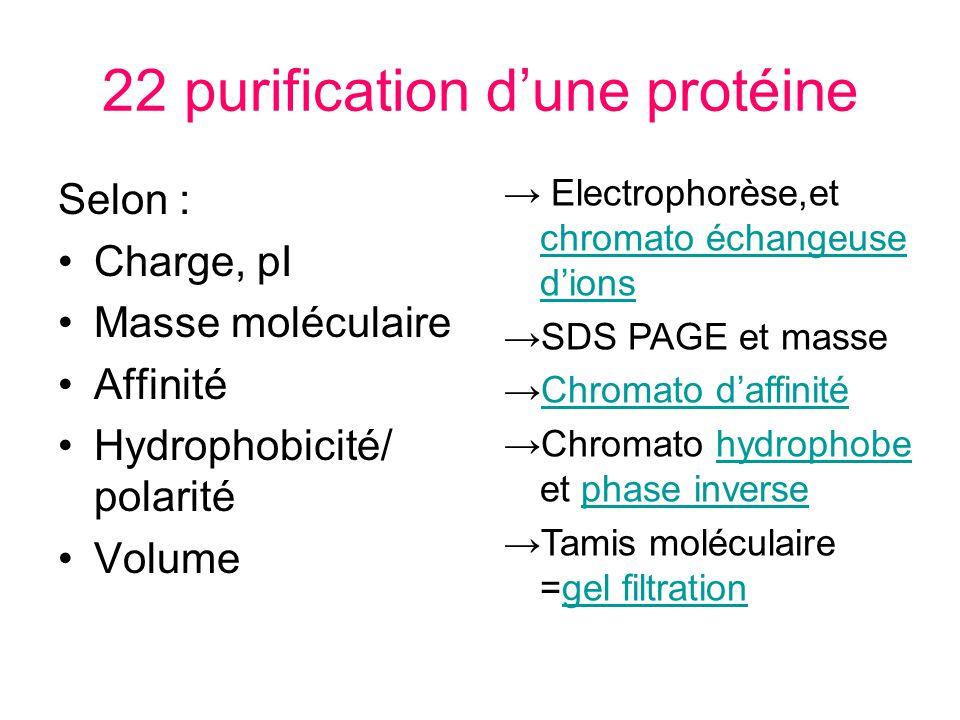 22 purification dune protéine Selon : Charge, pI Masse moléculaire Affinité Hydrophobicité/ polarité Volume Electrophorèse,et chromato échangeuse dion