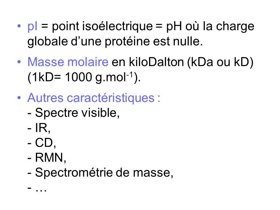 pI = point isoélectrique = pH où la charge globale dune protéine est nulle. Masse molaire en kiloDalton (kDa ou kD) (1kD= 1000 g.mol -1 ). Autres cara