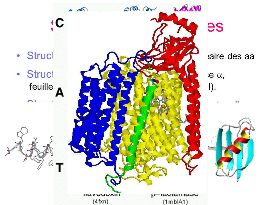 Structure des protéines Structure I : séquence = enchaînement linéaire des aa Structure II : repliement daa proches, hélice, feuillet, boucles, non st