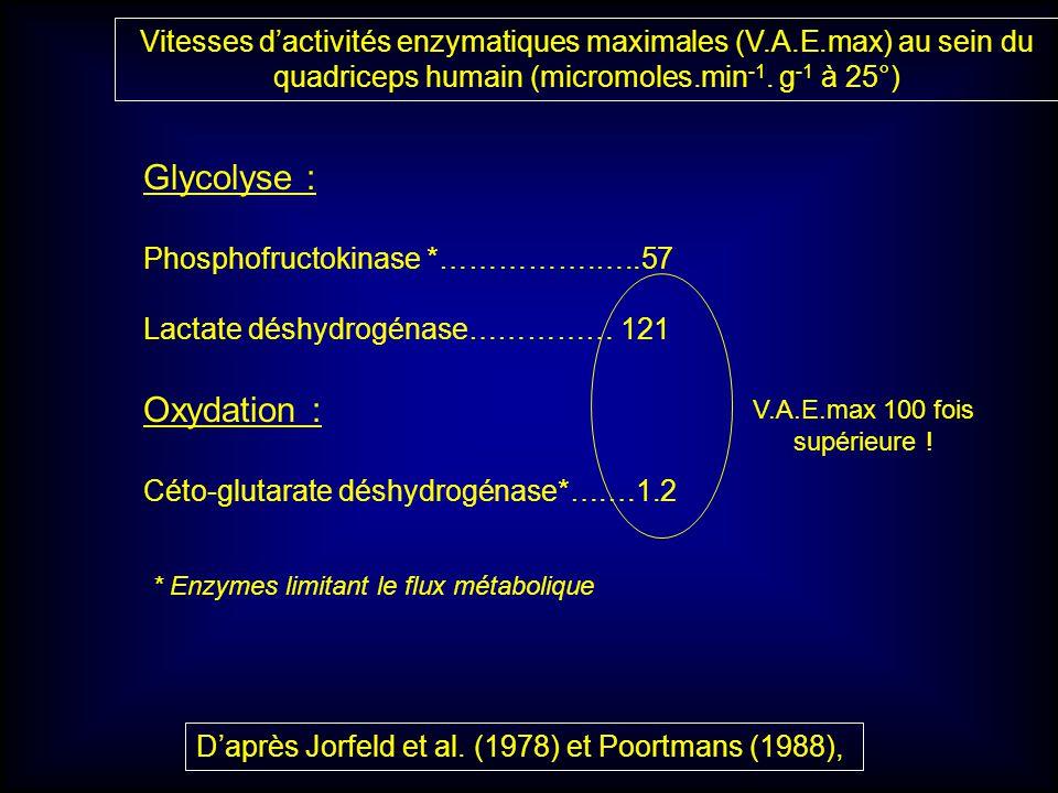 Vitesses dactivités enzymatiques maximales (V.A.E.max) au sein du quadriceps humain (micromoles.min -1. g -1 à 25°) Glycolyse : Phosphofructokinase *…