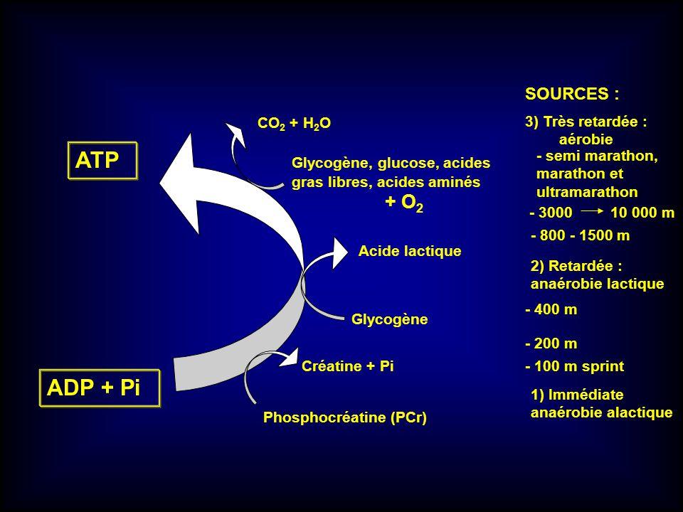 ATP ADP + Pi Glycogène, glucose, acides gras libres, acides aminés + O 2 Créatine + Pi Phosphocréatine (PCr) 1) Immédiate anaérobie alactique SOURCES