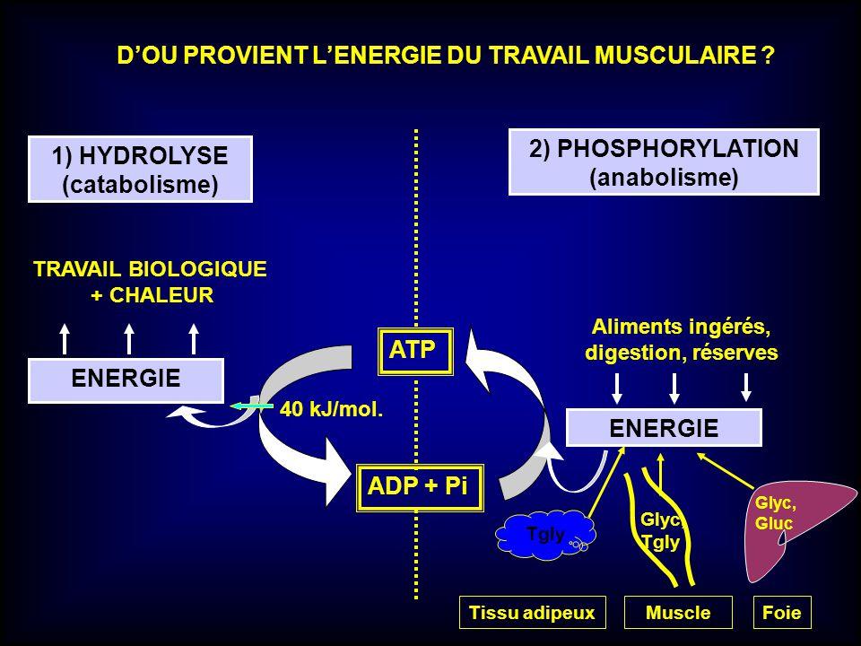 ENERGIE Aliments ingérés, digestion, réserves 1) HYDROLYSE (catabolisme) 2) PHOSPHORYLATION (anabolisme) TRAVAIL BIOLOGIQUE + CHALEUR ATP ADP + Pi DOU