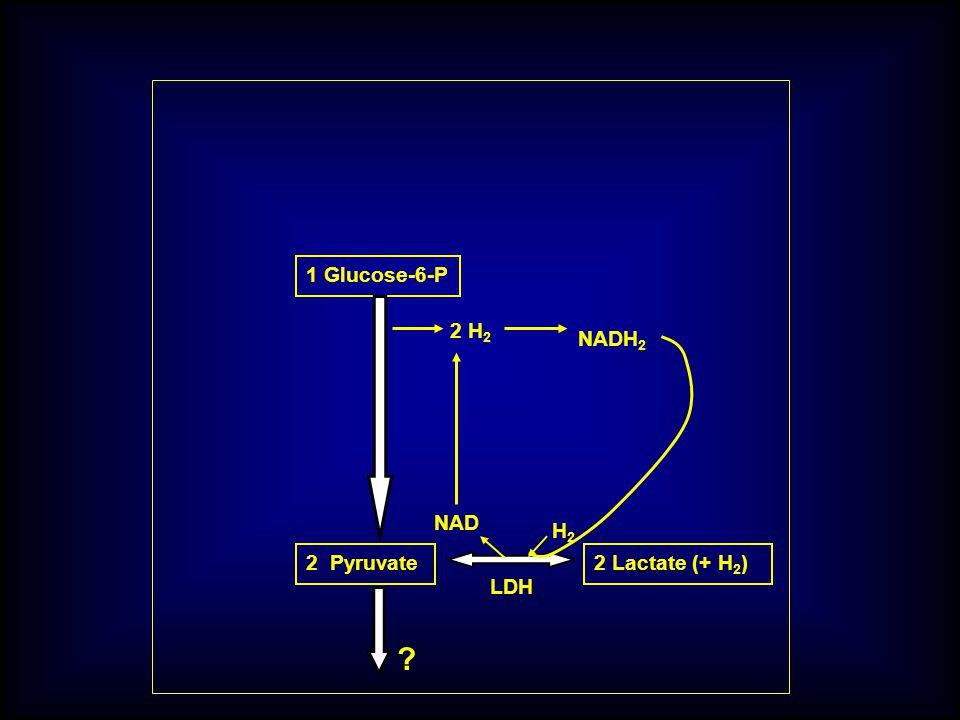 1 Glucose-6-P 2 Pyruvate 2 H 2 2 Lactate (+ H 2 ) LDH NADH 2 NAD H 2 ?