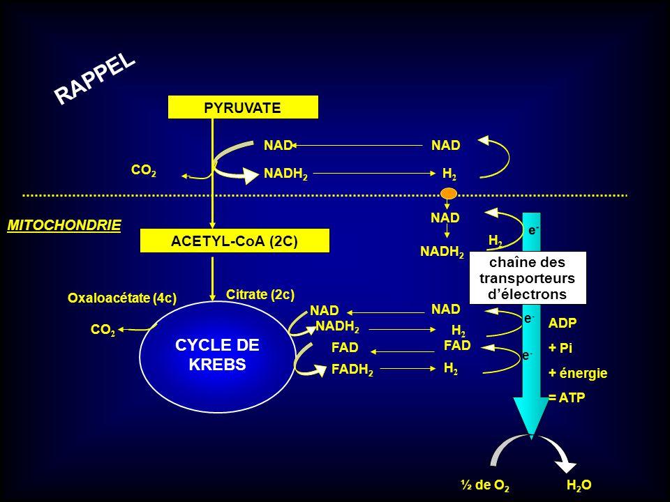 PYRUVATE ACETYL-CoA (2C) NAD NADH 2 CYCLE DE KREBS NAD NADH 2 FADH 2 CO 2 H2H2 NAD H2H2 H2H2 chaîne des transporteurs délectrons ½ de O 2 H 2 O ADP +